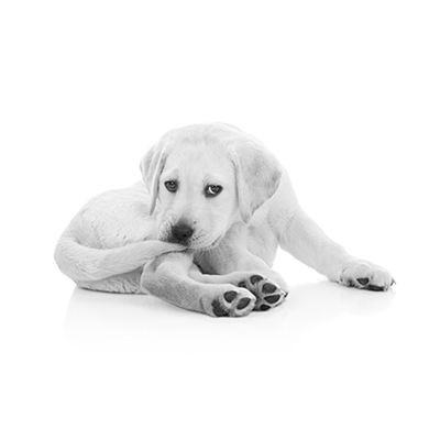 Image of puppy biting tail regarding SEO longtail keywords